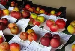 apple day bromham 2018 gl